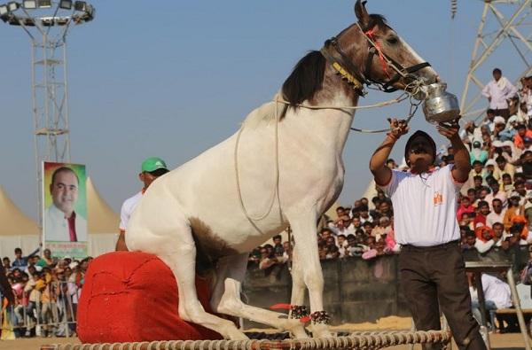कोरोनाच्या संकटाने हाल; दागिने गहाण ठेवून घोड्यांची देखभाल