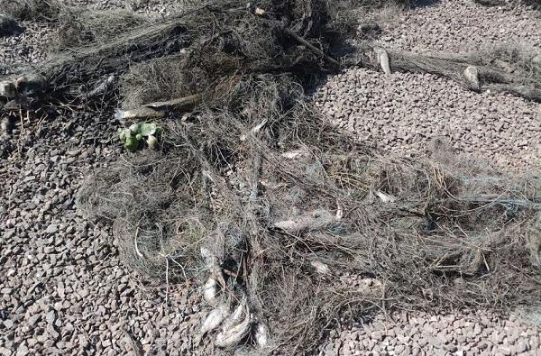 नांदूर मधमेश्वर पक्षी अभयारण्यात माशांच्या जाळ्यात अडकून 18 पक्षांचा मृत्यू