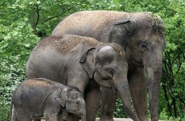 हत्तीने सोंडेत पकडून आपटलं, जयसिंगपूरच्या भर बाजारात थरार