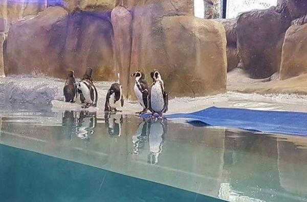 पेंग्विनमुळे राणीबागेतील पर्यटकांमध्ये वाढ
