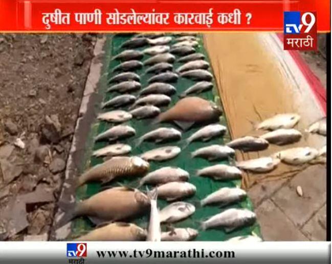 दुषीत पाण्याचे बळी, इंद्रायणी नदीत हजारो मासे मृत