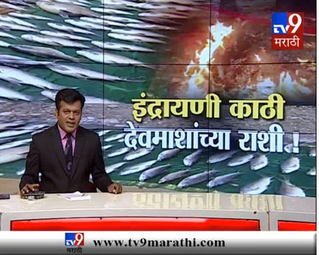 देहू : पाण्याच्या प्रदुषणामुळे माशांचा मृत्यू, मृत माशांवर निसर्गप्रेमींनी केले अंत्यसंस्कार