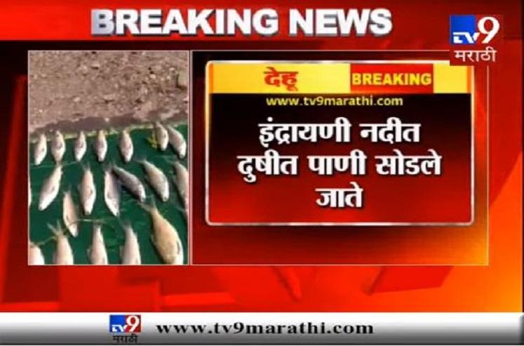 टीव्ही 9 इम्पॅक्ट : इंद्रायणी नदी मासे मृत्यू प्रकरणी महाराष्ट्र प्रदूषण नियंत्रण मंडळाकडून देहू ग्रामपंचायतीला नोटीस
