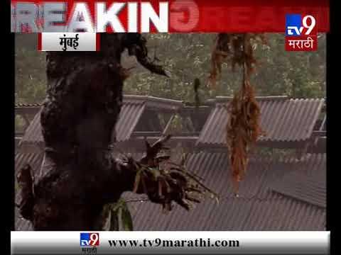 मुंबई आणि गुजरातमध्ये जोरदार पाऊस