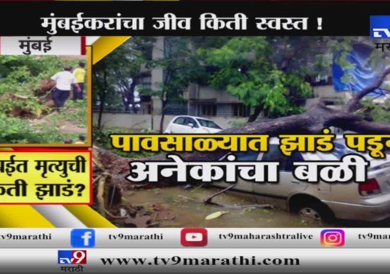 स्पेशल रिपोर्ट : मुंबईत मृत्यूची किती झाडं? मुंबईवर आता नवं संकट