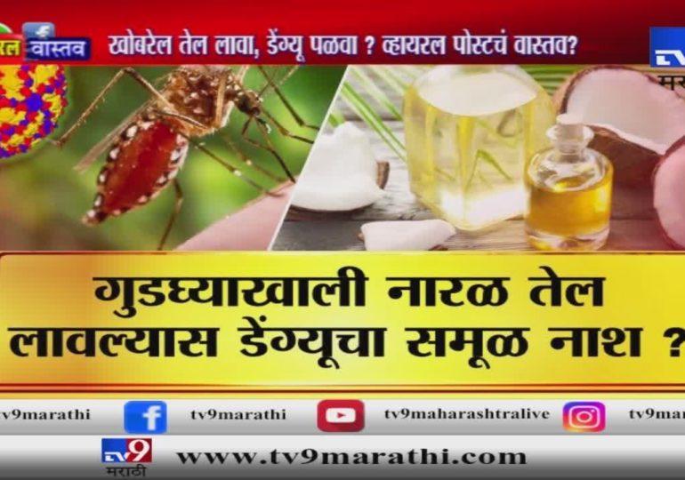 स्पेशल रिपोर्ट : खोब-याचं तेल लावा, डेंग्यू पळवा?