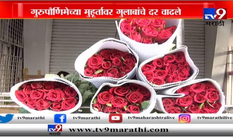 गुलाबानं 'भाव' खाल्ला, गुरुपौर्णिमेनिमित्त गुलाबाचे दर तिप्पट