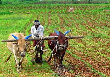 विदर्भात पेरणीला सुरुवात, शेतकऱ्यांकडून बियाणांची खरेदी, सोयाबीनकडे कल जास्त