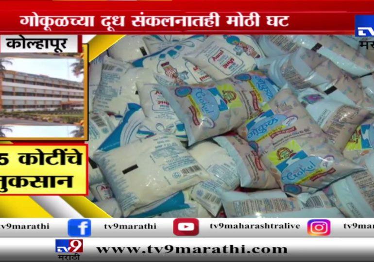 स्पेशल रिपोर्ट : महापुरामुळे गोकूळ दूध संघाचं 25 ते 30 कोटींचं नुकसान
