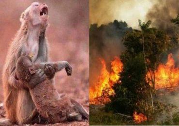 जगाला 20 टक्के ऑक्सिजन देणाऱ्या अमेझॉन पर्जन्यवनात आगीचं रौद्ररुप