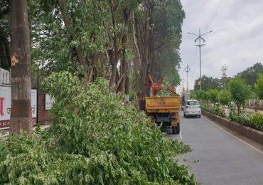 नागपुरात चार वर्षात 4 लाख वृक्षांची कत्तल, माहिती अधिकारात उघड