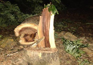 मेट्रो कारशेडसाठी अंधारात झाडं कापण्यास सुरुवात