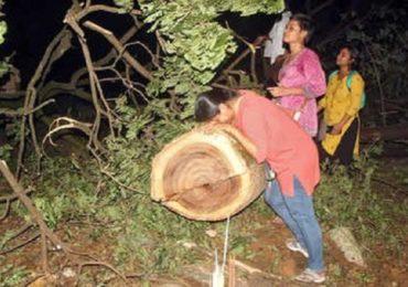 Aarey tree cutting : 'आरे'तील वृक्षतोड अद्याप सुरु, दोन दिवसात 1800 झाडांची कत्तल