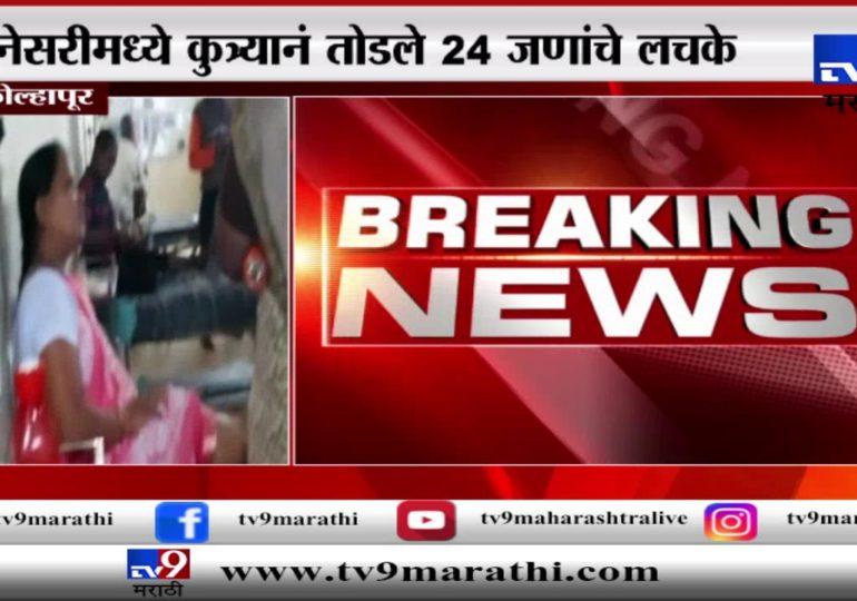 कोल्हापुरात पिसाळलेल्या कुत्र्यांचा उच्छाद, नेसरीमध्ये कुत्र्यानं तोडले 24 जणांचे लचके