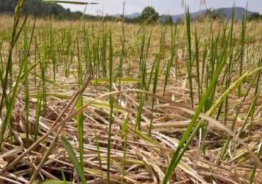 BLOG : परतीचा पाऊस, शेतकरी आणि सत्तासंघर्ष