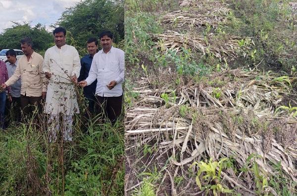 ज्वारीच्या कणसांना कोंब, सोयाबीन मातीमोल, गंगाखेडच्या शेतकऱ्यांची सरसकट भरपाईची मागणी