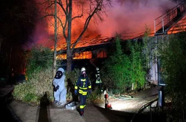 VIDEO : प्राणी संग्रहालयाला भीषण आग, 30 हून अधिक प्राण्यांचा होरपळून मृत्यू
