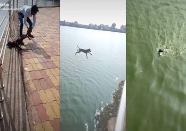 Tik-Tok वर प्रसिद्धीसाठी कुत्र्याला तलावात फेकलं, तक्रारीनंतर तरुणाचा माफीनामा