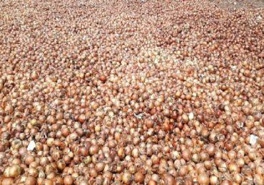 परदेशातून आणलेला 7 हजार टन कांदा सडला