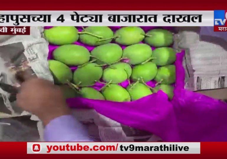 कोकणाचा हापूस नवी मुंबईत, APMC मार्केटमध्ये हापूस आंब्याच्या 4 पेट्या दाखल