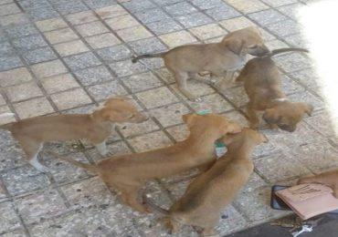आठ कुत्र्यांवर विषप्रयोग, 22 पिल्लांना झाडीत फेकलं, विरारमधील संतापजनक प्रकार