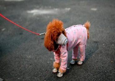 कोरोनाचा वाढता कहर, माणसांपाठोपाठ आता पाळीव कुत्र्यालाही लागण