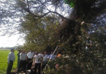PHOTO : नाशिकमध्ये पॅराशूटसह जवान बाभळीच्या झाडावर अडकला, झाड तोडून खाली उतरवलं
