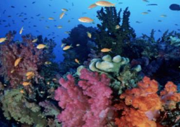 लॉकडाऊनमुळे समुद्रातील प्रदुषणात घट, पालघर समुद्रात माशांचा वावर