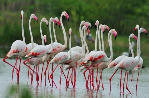 Lockdown Effect : लॉकडाऊनमुळे प्रदूषणात घट, उजनी काठावर पक्षांचा मुक्त विहार