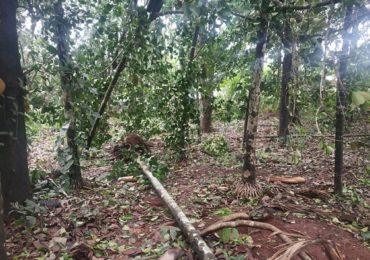 Cyclone Nisarga | कोकणात हाहा:कार, आंबा, फणस, सुपारीची झाडं जमीनदोस्त, अनेक घरांची पडझड