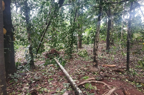Cyclone Nisarga   कोकणात हाहा:कार, आंबा, फणस, सुपारीची झाडं जमीनदोस्त, अनेक घरांची पडझड