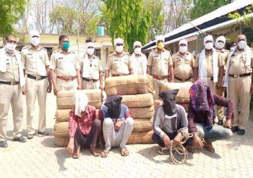 हैदराबादहून आलेल्या ट्रकचा थरारक पाठलाग, अमरावतीत पोलिसांनी 300 किलो गांजा पकडला