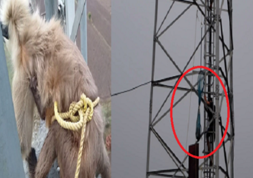 कुत्र्याच्या भीतीने पिल्लासह माकड दोन दिवस मोबाईल टॉवरवर अडकून