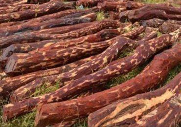 कांद्याच्या नावाखाली रक्तचंदनाची तस्करी, जेएनपीटीतून 4 कोटींचे घबाड जप्त