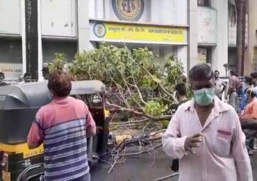 Tree Collapse | सहजा सहजी न पडणारं झाड पडलं, बँकेसमोर उभे असलेल्या एकाचा मृत्यू, दोघे जखमी