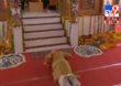 Ayodhya Ram Mandir Bhoomipoojan Live   पंतप्रधान नरेंद्र मोदींचा रामलल्लाला साष्टांग दंडवत