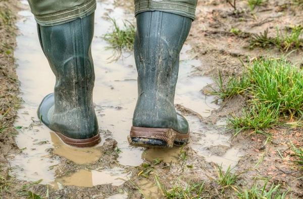 Leptospirosis   'लेप्टो'चा धोका! पायाला जखम असल्यास पावसाच्या पाण्यातून चालणे टाळा
