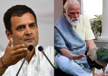 पंतप्रधान मोदी मोरासोबत व्यग्र, नागरिकांनी आपला जीव स्वतः वाचवावा : राहुल गांधी