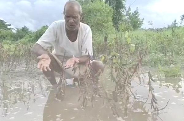 hingoli crop loss