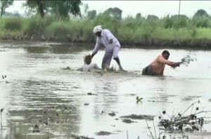 Farmers, Heavy rain, Maharashtra, crops, शेतकरी, औरंगाबाद