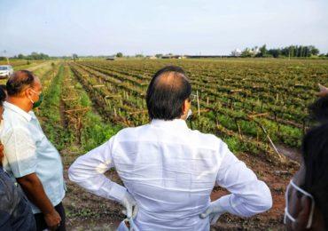 PHOTO | अजित पवार बांधावर, शेतकऱ्यांना नुकसान भरपाईचं आश्वासन