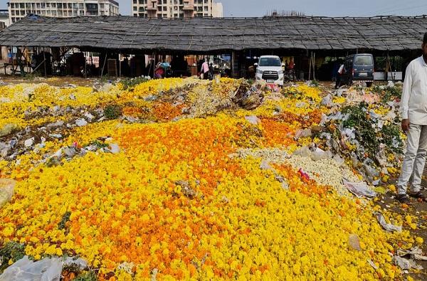 पावसामुळे ऐन नवरात्रीत फुलं खराब, विक्री होत नसल्याने फुलं रस्त्यावर फेकण्याची वेळ