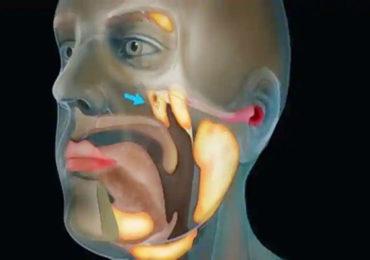 Cancer | कर्करोगाचा उपचार करणे सोपे होणार, 300 वर्षांत पहिल्यांदाच मानवी शरीरात नव्या ग्रंथींचा शोध!