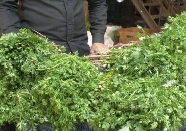भाजीपाला मार्केटमध्ये भाज्यांची आवक वाढली, कोथिंबीरची जुडी केवळ...