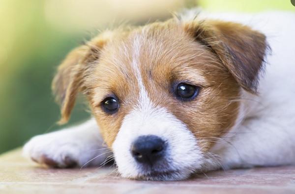 कुत्रे फिरवण्यासाठी तगडा पगार, वर्षाकाठी 29 लाखांची ऑफर, निवृत्तीनंतर पेन्शनही