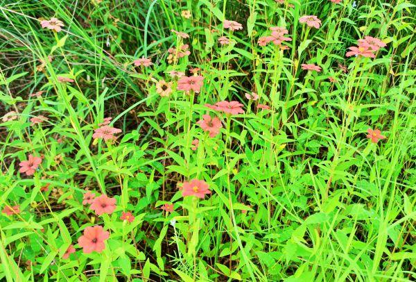 Flowers of Sahyadri Balaghat Harishchandra Range of Hill Deogaon Sangamner