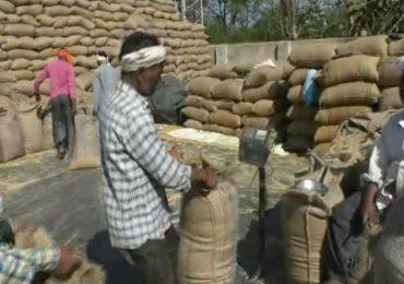 वनहक्क पट्ट्यांच्या जमिनींच्या सातबाऱ्यावर 'सरकार' असा उल्लेख, शेतकऱ्यांना धान्य व्यापाऱ्यांना कमी भावात विकण्याची वेळ