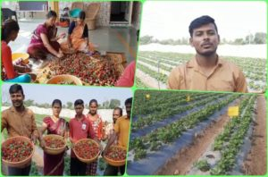 Akshay Temkar Strawberry Farming