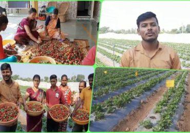 PHOTO | महाराष्ट्रात फक्त महाबळेश्वरच नाही, आता पुण्यातही स्ट्रॉबेरीचं उत्पादन, युवा शेतकऱ्याचा यशस्वी प्रयोग