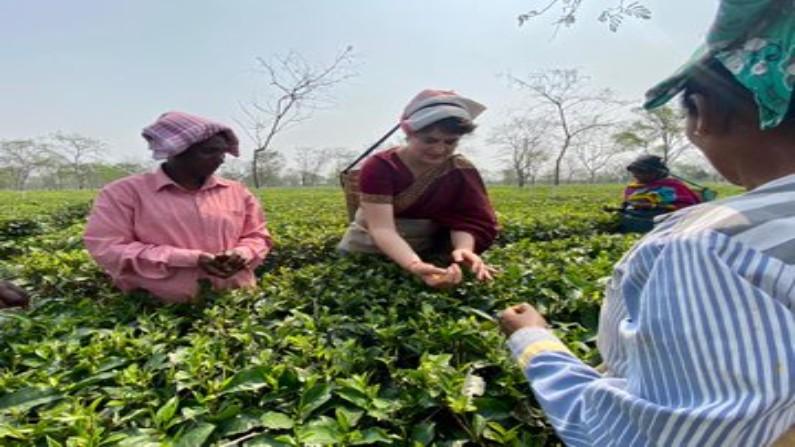 Assam Assembly Elections Priyanaka Gandhi plucking tea leaves in Assam